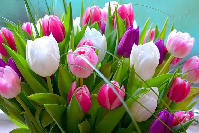 феррари с днем рождения тюльпаны фото главным